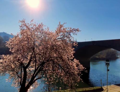 La Sosta sul Ponte